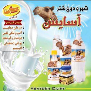 شیر و دوغ شتر آسایش
